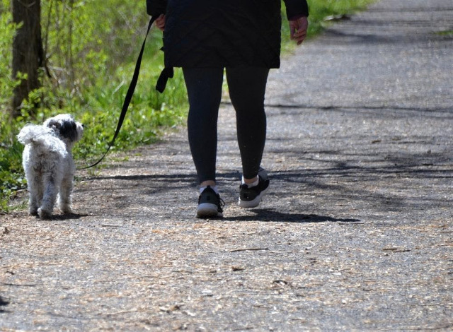 Consider When Going Out for a Walk with a Dog: Dog Walker Guide