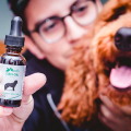 Simple Guide To CBD Oil For Dogs